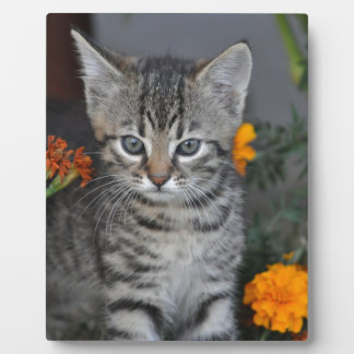 kitten photo plaque