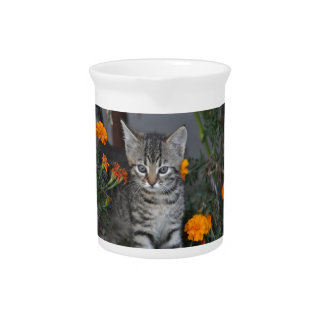 kitten pitcher