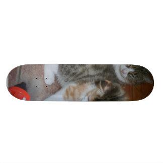 Kitten Playing And Mom Resting Skate Board Decks
