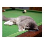 Kitten playing on pool table. postcard