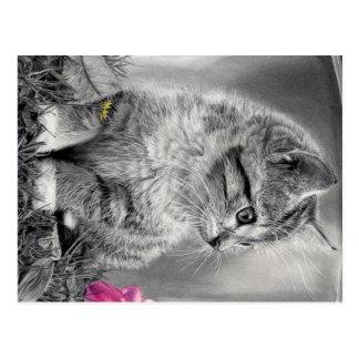 Kitten Post Card