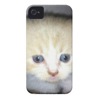 kitten power iPhone 4 Case-Mate cases