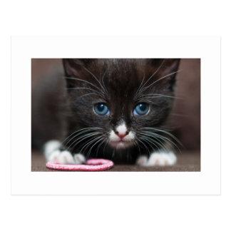 Kitten Power Post Card
