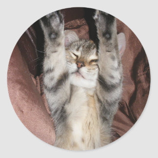 Kitten Power Sticker