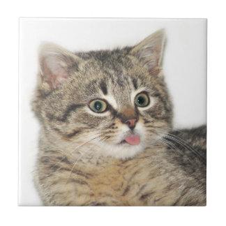 Kitten razzberry small square tile