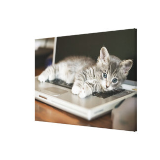 Kitten resting on laptop computer stretched canvas print
