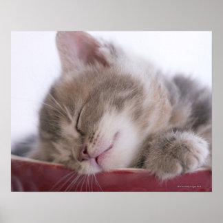 Kitten Sleeping in Bowl 2 Poster