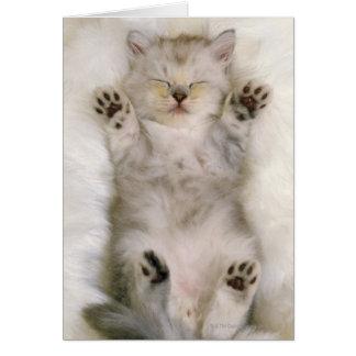 Kitten Sleeping on a White Fluffy Carpet, High Card