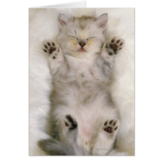 Kitten Sleeping on a White Fluffy Carpet, High Greeting Card