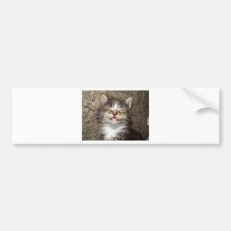 Kitten Smile Bumper Sticker