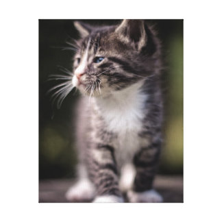 Kitten standing and squinting canvas print