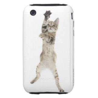Kitten standing on back paws iPhone 3 tough cover