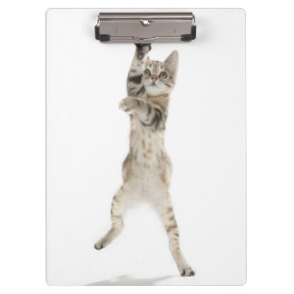 Kitten standing on back paws clipboard
