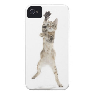 Kitten standing on back paws iPhone 4 cover
