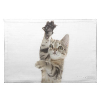 Kitten standing on back paws placemats
