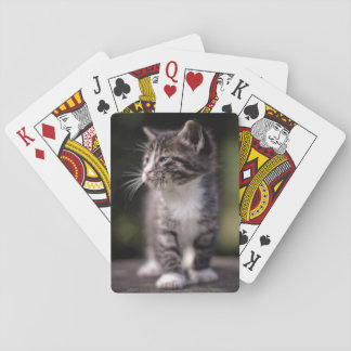 Kitten Standing Tall Playing Cards