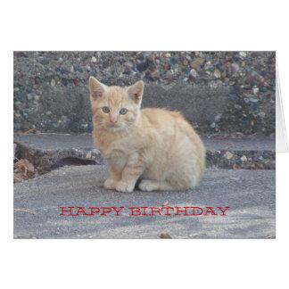 Kitten Sweetheart Birthday Greeting Card