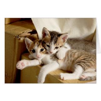 Kitten Twins Blank Greeting Card