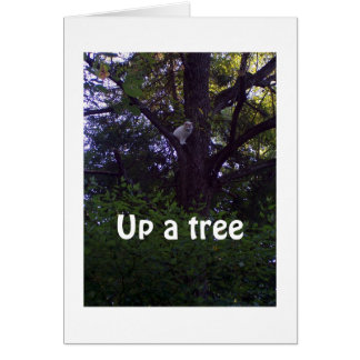 KITTEN UP A TREE WISHES YOU WERE NOT A YEAR OLDER CARD