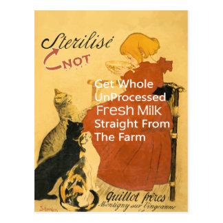 Kitten Vintage Milk Poster Postcard
