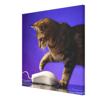 Kitten with computer mouse gallery wrapped canvas