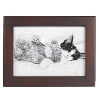 Kitten with her  teddy bear keepsake box