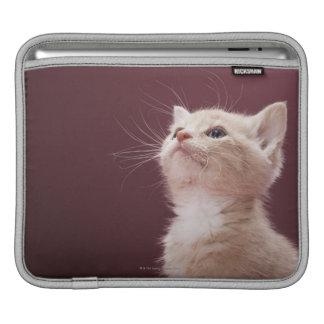 Kitten with Whiskers iPad Sleeve
