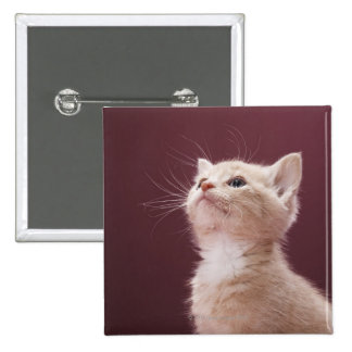 Kitten with Whiskers Pinback Button
