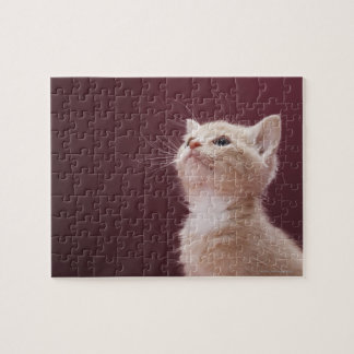 Kitten with Whiskers Puzzles