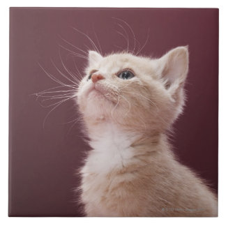 Kitten with Whiskers Large Square Tile