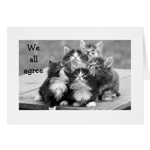 KITTENS ALL AGREE U SHOULD HAVE HAPPY BIRTHDAY CARDS