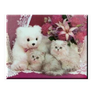 Kittens And Teddy Bear Postcard