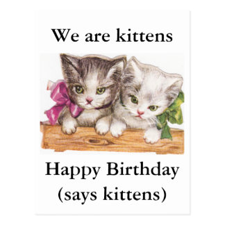 Kittens Birthday Postcard