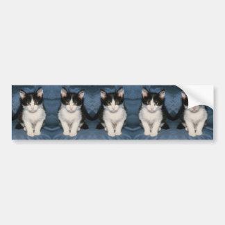 kittens bumper sticker car bumper sticker