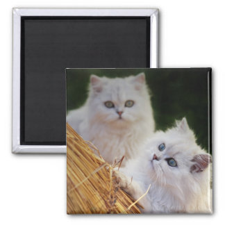 Kittens come play square magnet
