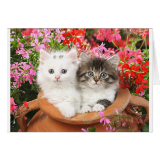 Kittens in a pot. card