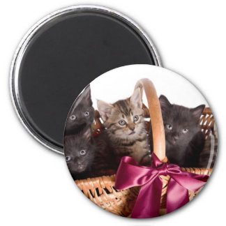 kittens in a wicker basket 6 cm round magnet