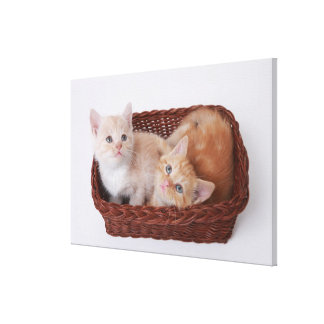Kittens in basket stretched canvas print