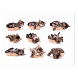 kittens in has tennis shoe postcard
