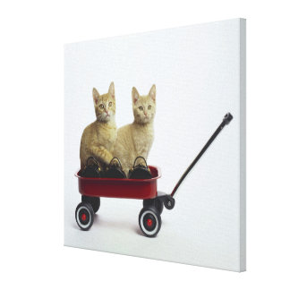Kittens in wagon stretched canvas print
