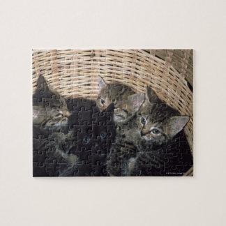 kittens jigsaw puzzle
