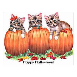 Kittens on Pumpkins for Halloween Postcard