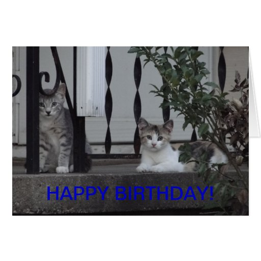 Kittens/Purrrfect Birthday Greeting Cards
