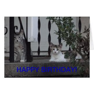 Kittens/Purrrfect Birthday Greeting Card