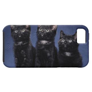 Kittens Tough iPhone 5 Case