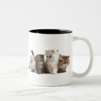 Kittens Two-Tone Coffee Mug