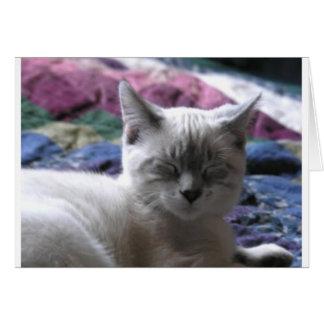 kitty 1 card
