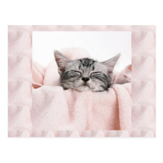 Kitty and blanket postcard