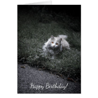 Kitty Cat, Cute Feline Outdoors in Grass Kitten Card
