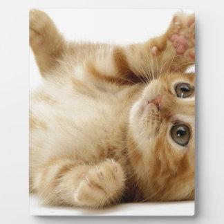 Kitty Cat Cute Item Plaque